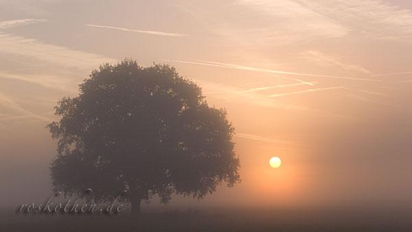 Sonnenaufgang im Herbst am Niederrhein