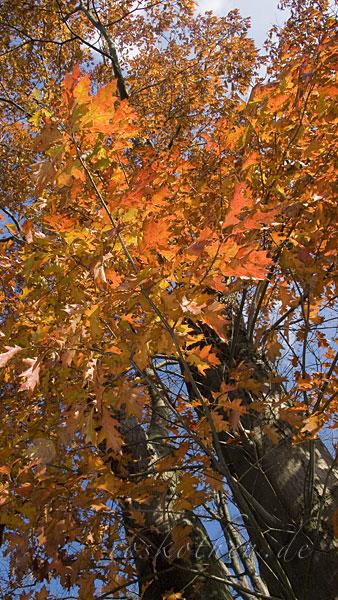 Herbstfoto