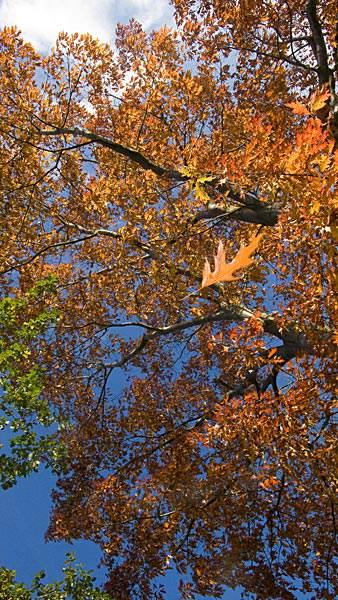 Herbstfoto am Niederrhein bei Vorst Foto: © Peter Roskothen