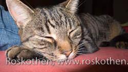 Katze Sophie ist sich keiner Schuld bewusst. Eben noch hat sie sich zwei Scheiben Wurst geklaut.