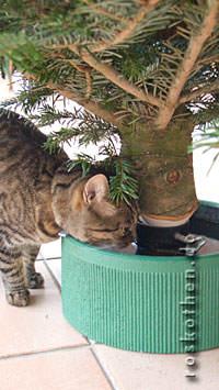 Katze trinkt aus Christbaumständer