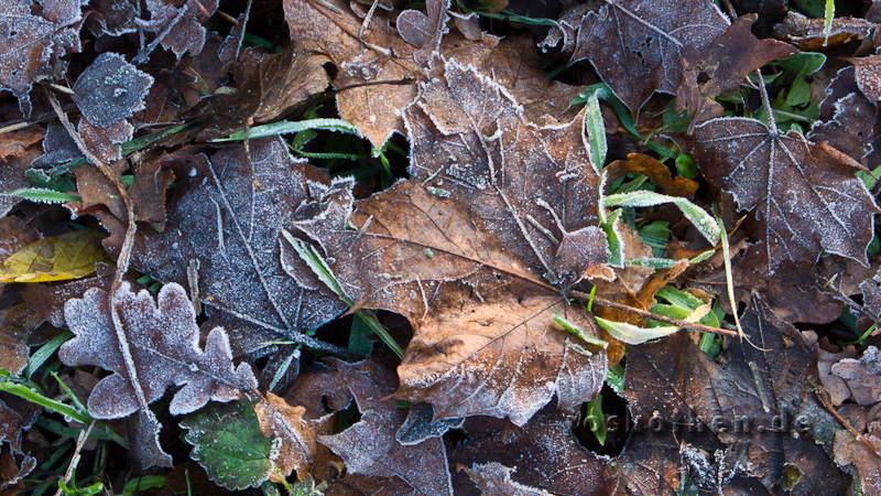Winterfoto Niederrhein 2010
