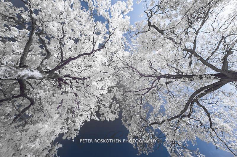 Meeting Trees - Baumtreffen Fotograf Peter Roskothen
