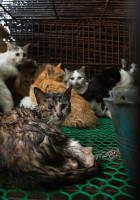 Katzenmarkt in China Quelle Animal Equality