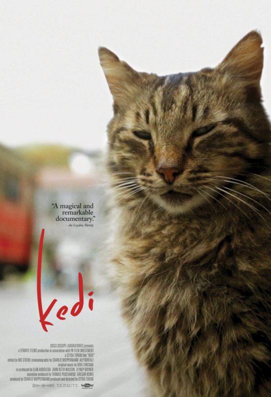 Kedi – Katzenfilm für Katzenfans – Geschenk für Katzenliebhaber